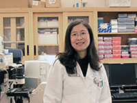 Ying Liang, M.D., Ph.D., University of Kentucky assistant professor of toxicology and cancer biology.