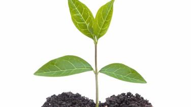 new plant shoot
