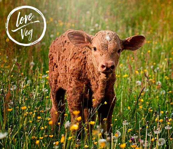 Love Veg