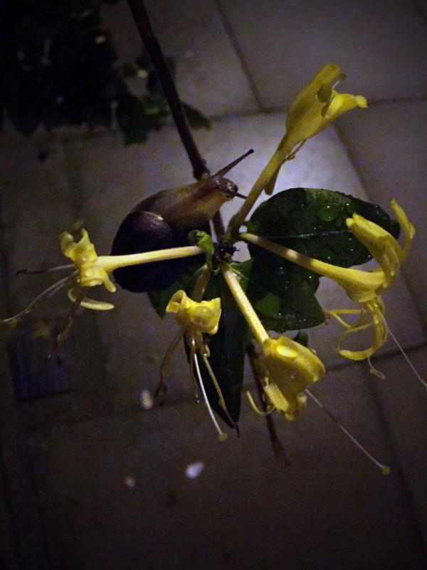 Victoria Adam: OrchardWhiteLightning*at LUNGLEY Gallery