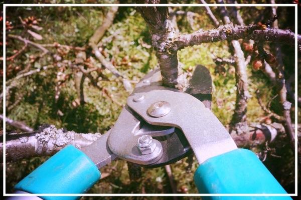 Tree Pruning 101 Workshop