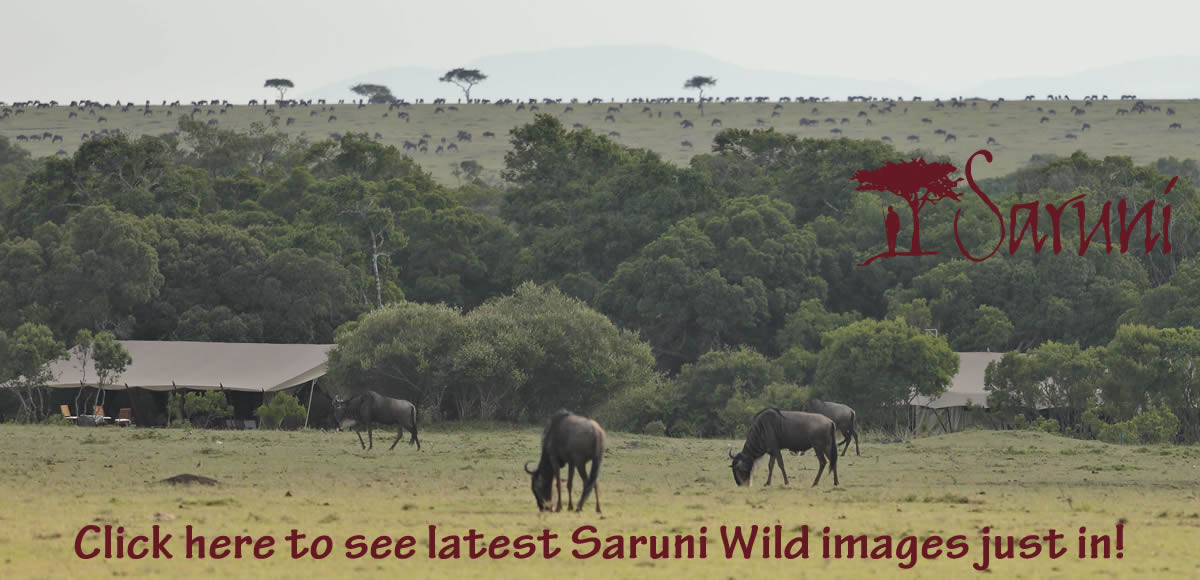See latest exciting Saruni Wild images