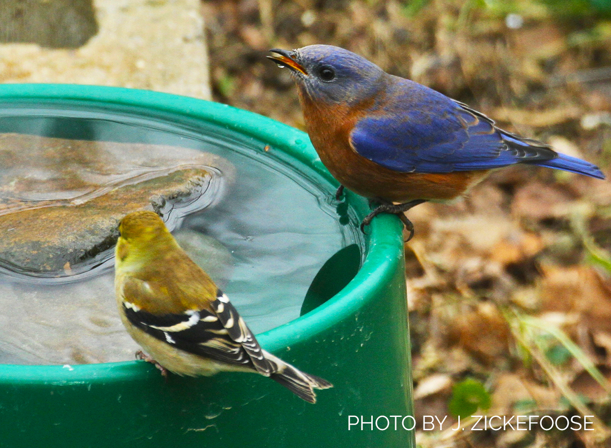 My Way: Use a Heated Dog Dish for a Winter Bird Bath!