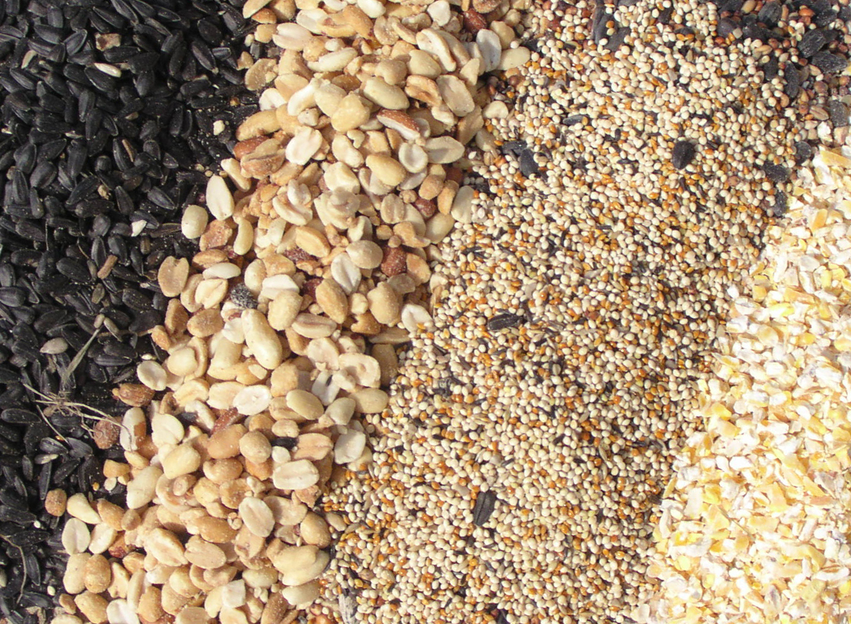 Seed Blends #101