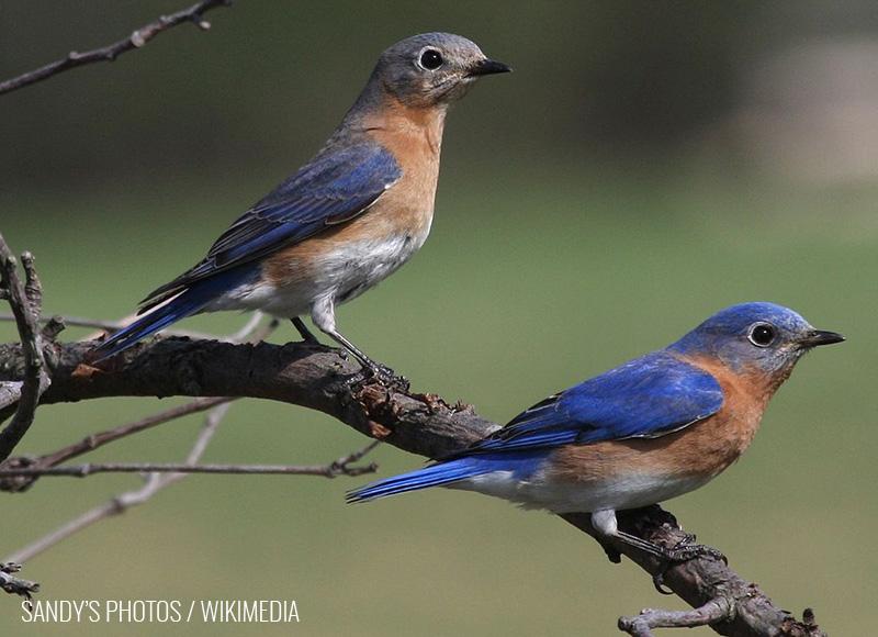Bluebird Question #1