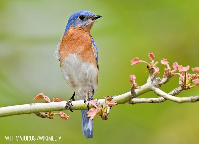 Bluebird question #3