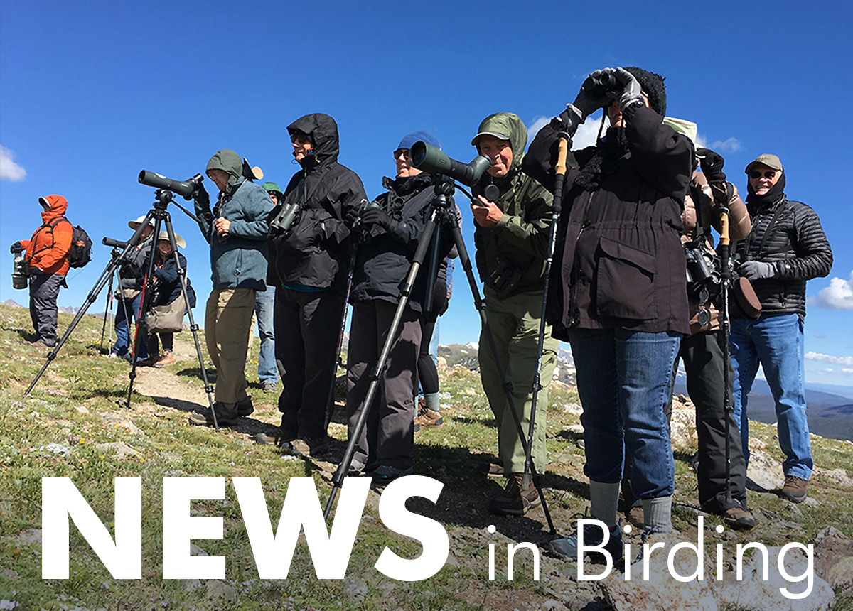 News in Birding, March 2019