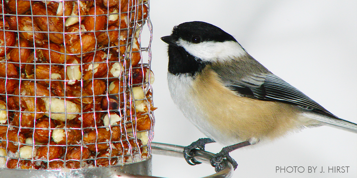 Become a Citizen Scientist with Project FeederWatch