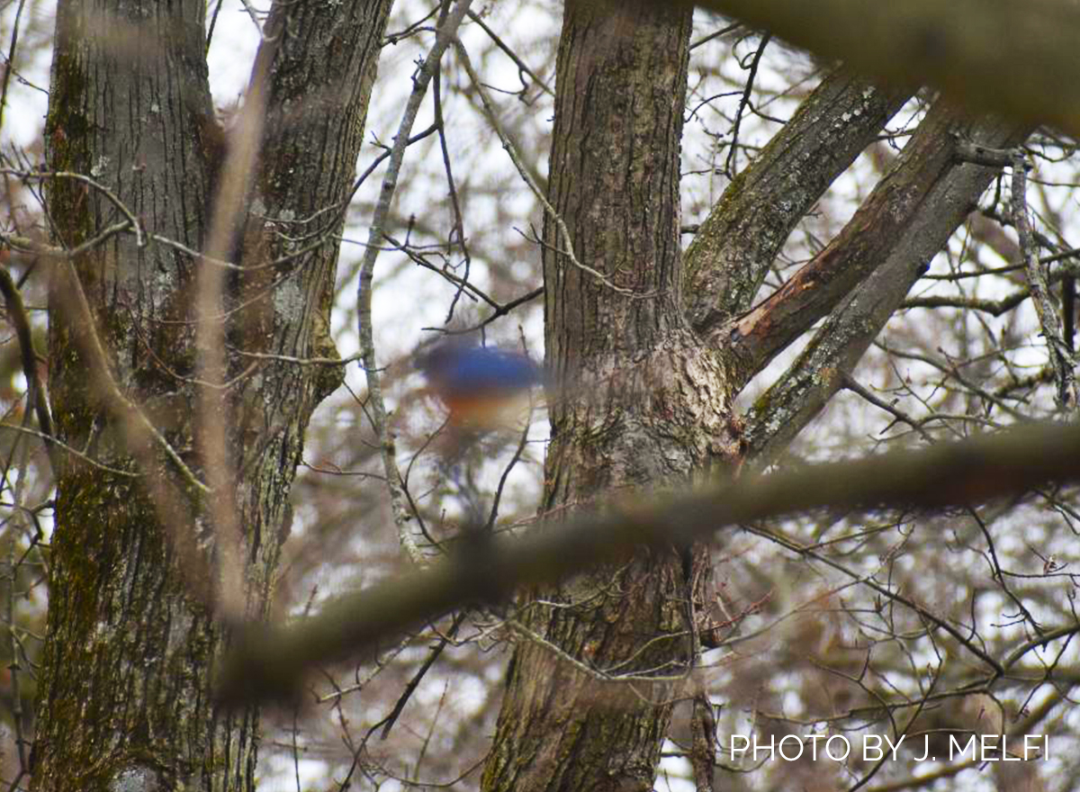 Attention, BirdWire Readers: Participate in Our Blurry Bird Contest!