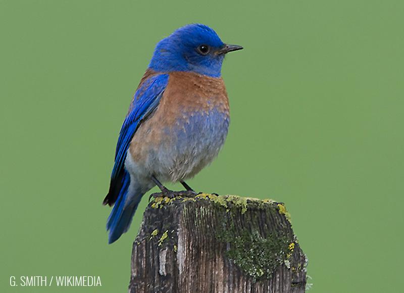 Bluebird Question #2
