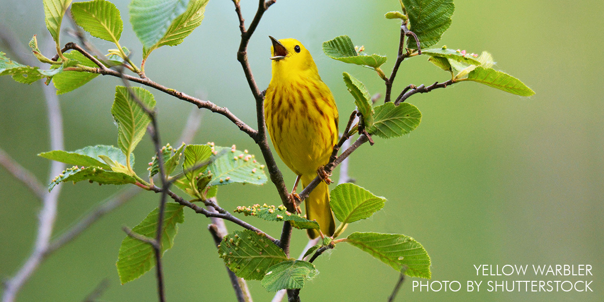 May 18 is World Migratory Bird Day
