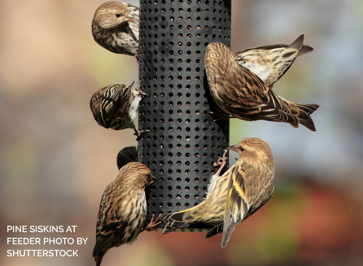 Gourmet or Bargain Seed: Which is Best for Birds?