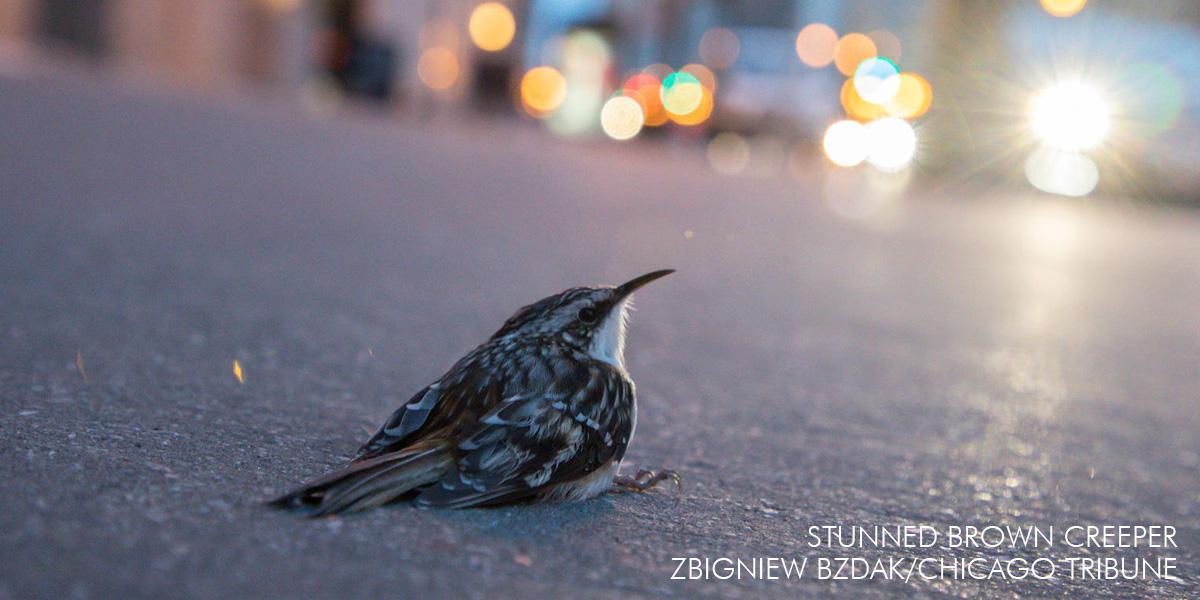 Bright Lights + Big Cities = Dead Birds