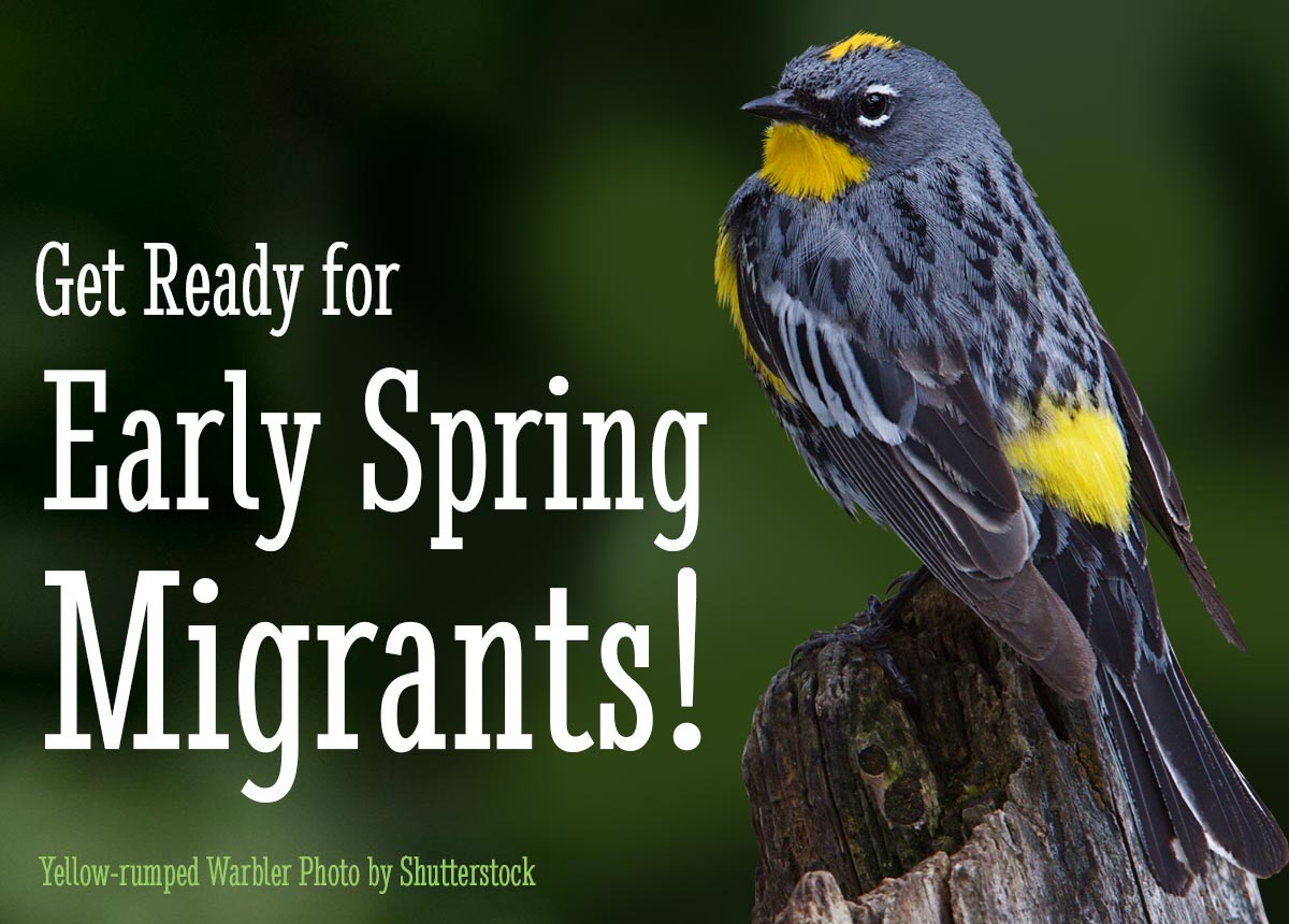 BirdWire: Have You Seen These Early Migrants In Your Area?