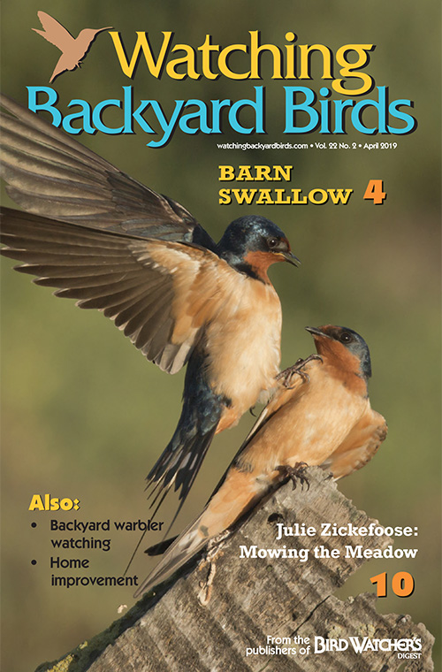 Watching Backyard Birds April 2019