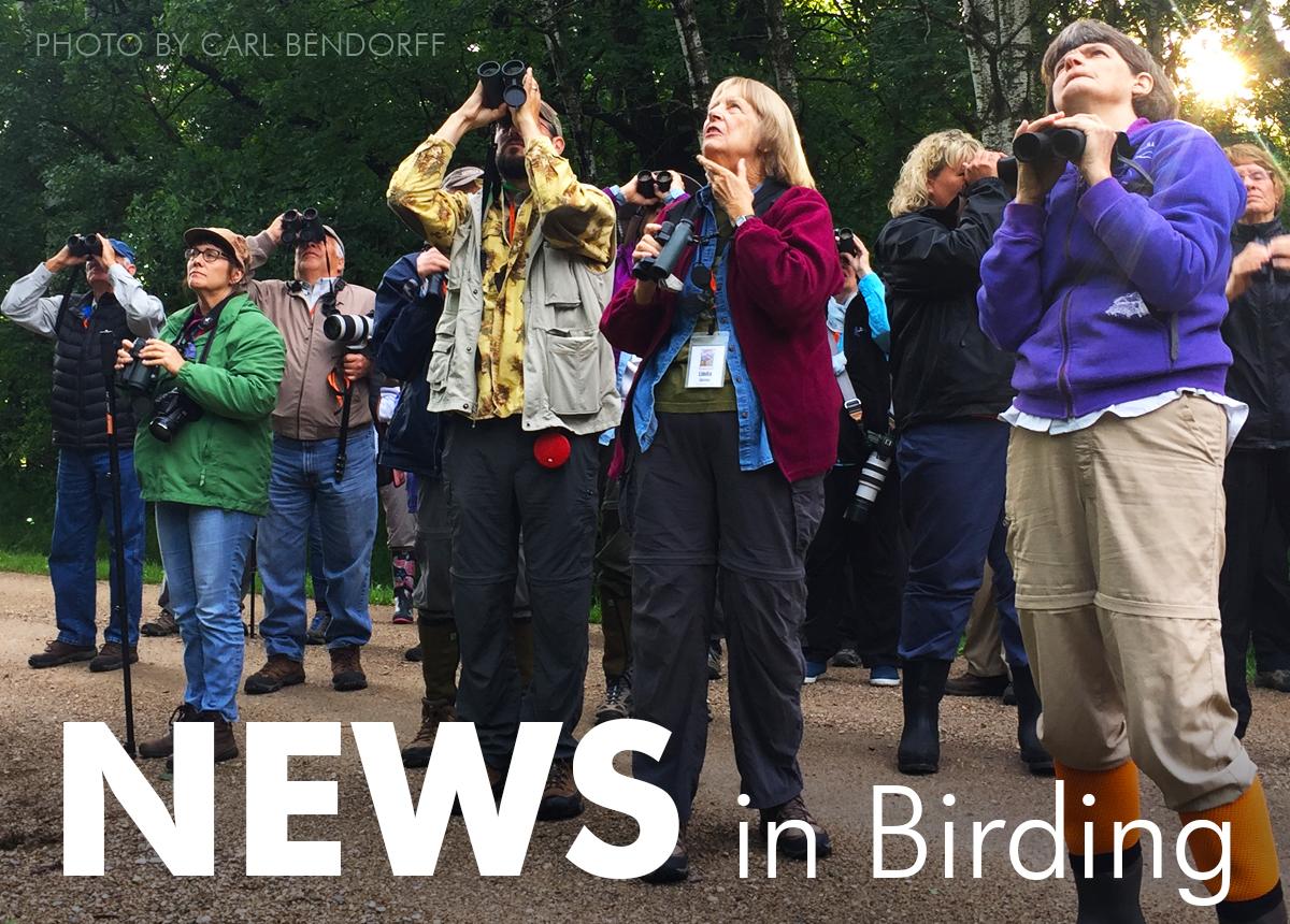 News in Birding, November 2019