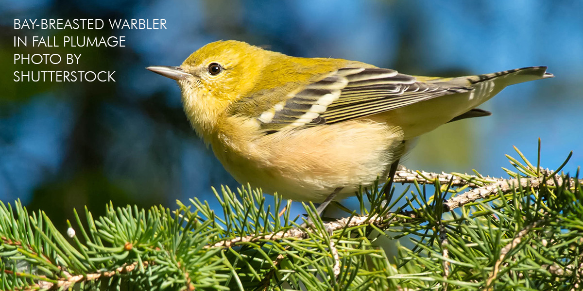 Fall Migration Rendezvous: Register Today!