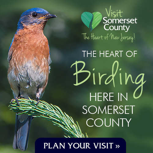 Visit Somerset County: the Heart of Birding in New Jersey