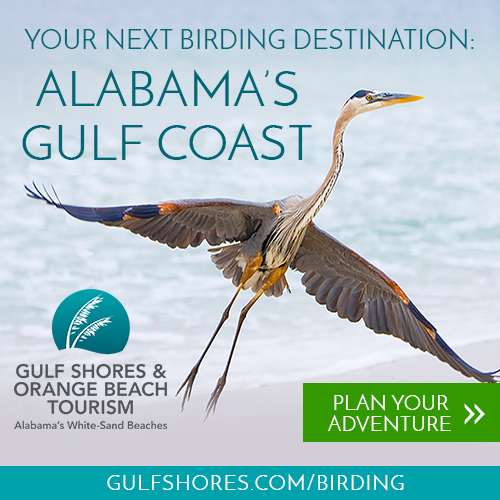 Your Next Birding Destination: Alabama Gulf Shores