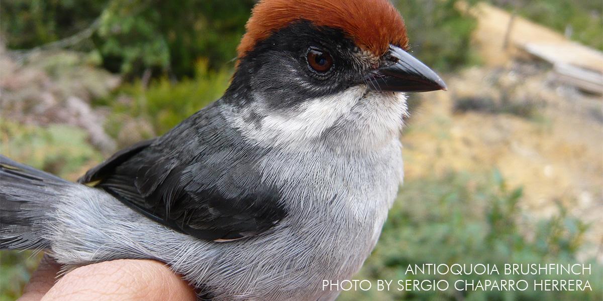 Bird Species Feared Extinct Found in Columbia
