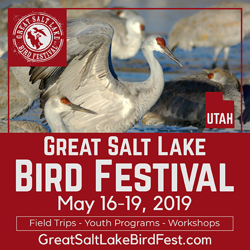 Great Salt Lake Bird Festival, May 16-19, 2019