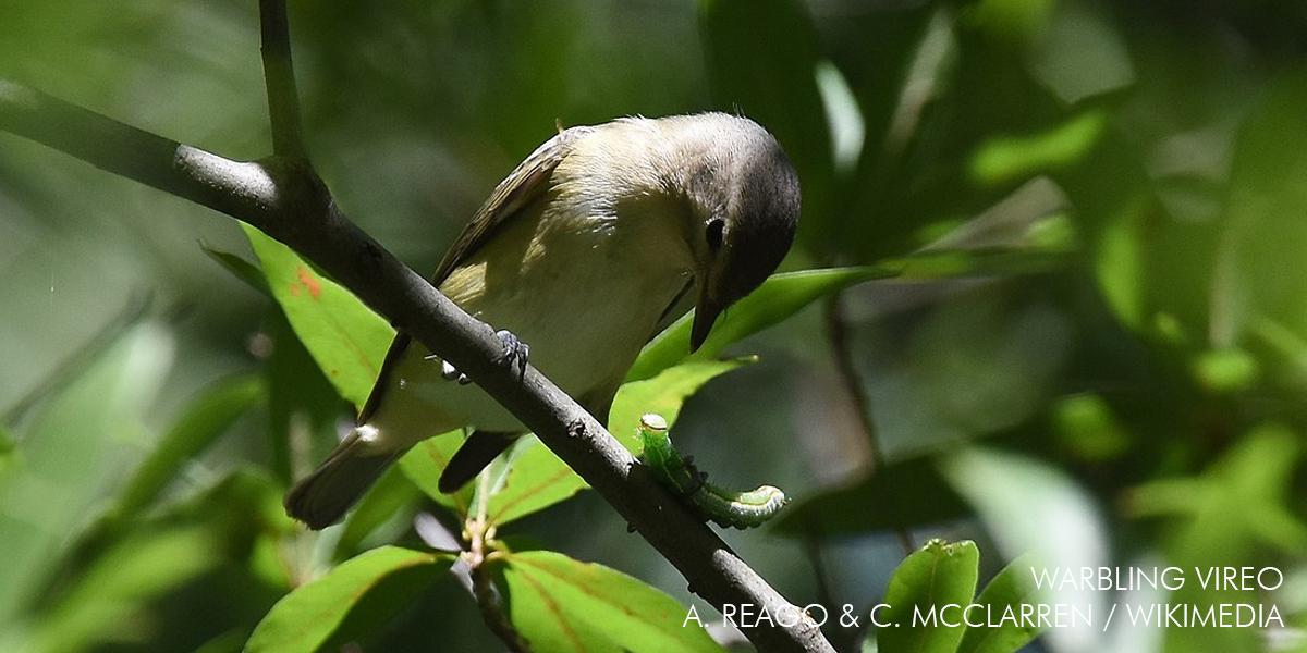 Birds, Blue Ridge, Beers & Biltmore: Ashville, North Carolina