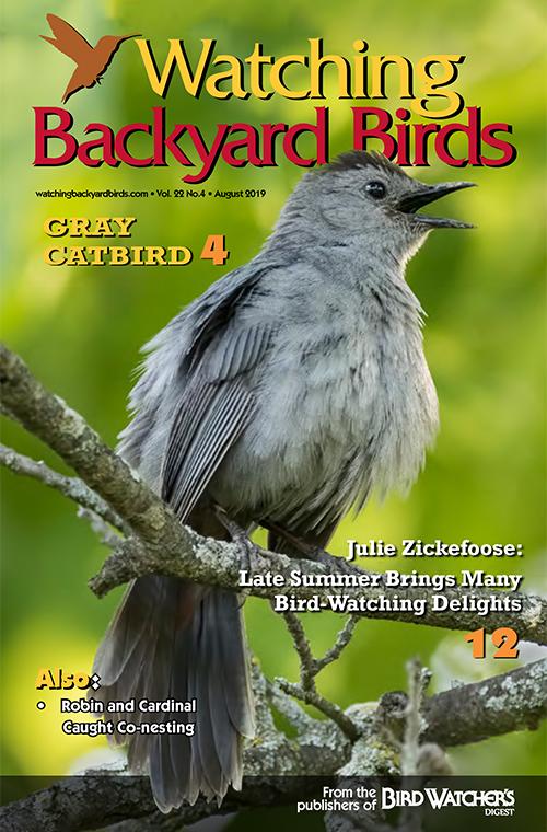 Watching Backyard Birds August 2019