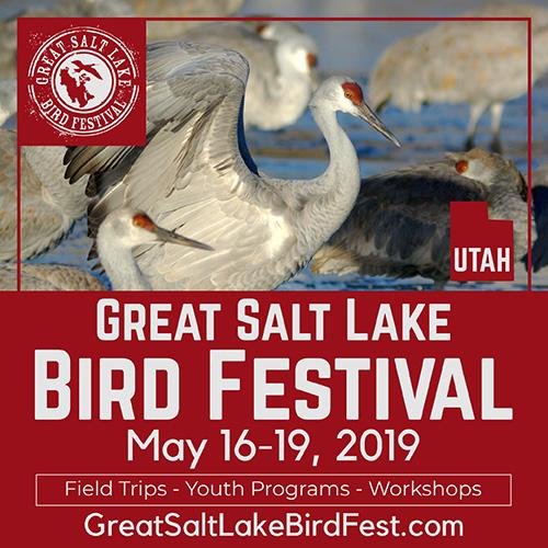Great Salt Lake Bird Festival, May 16-19, 2019