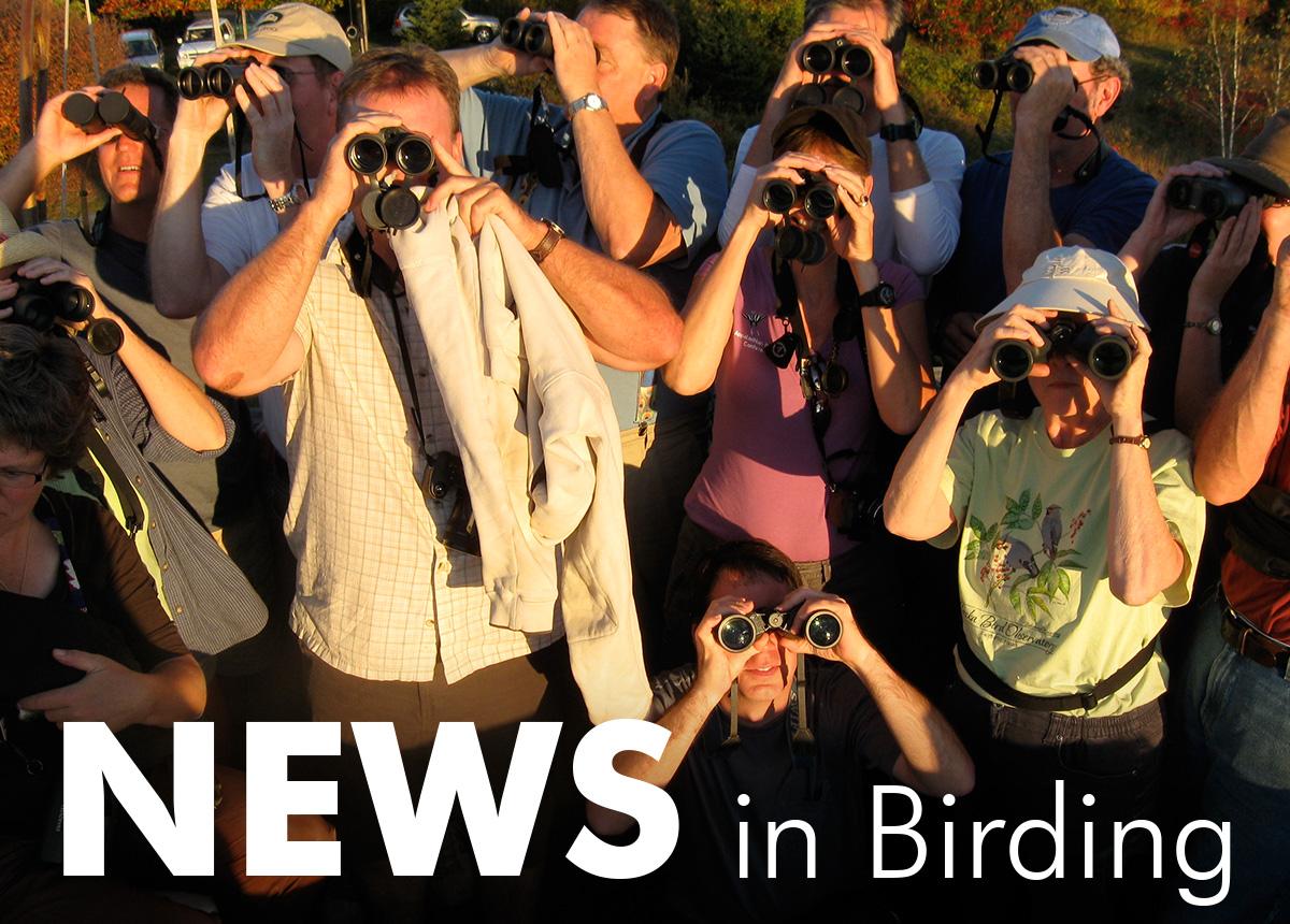 News in Birding