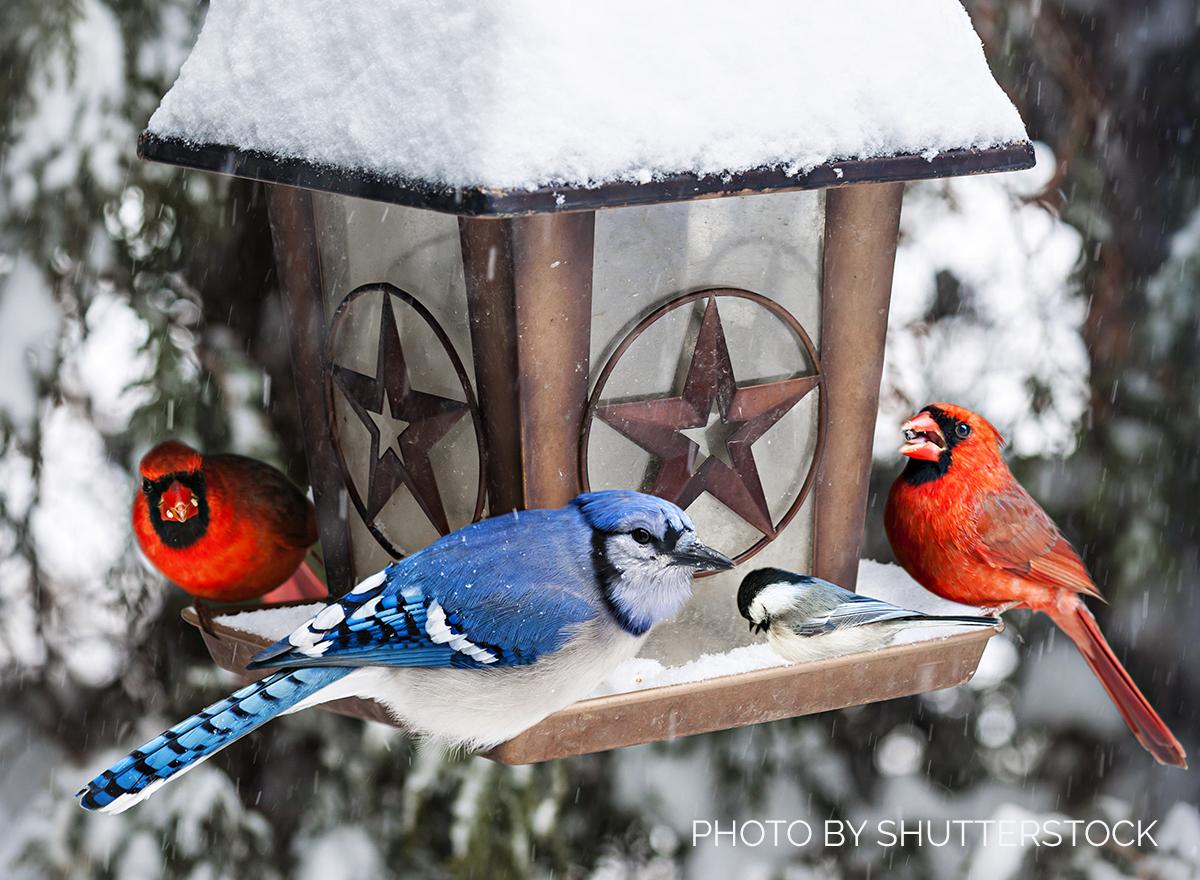 Tips for Deep Winter Bird Feeding
