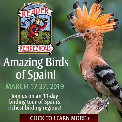 Amazing Birds of Spain