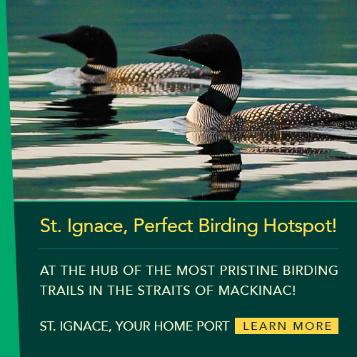 St. Ignace, Perfect Birding Hotspot!