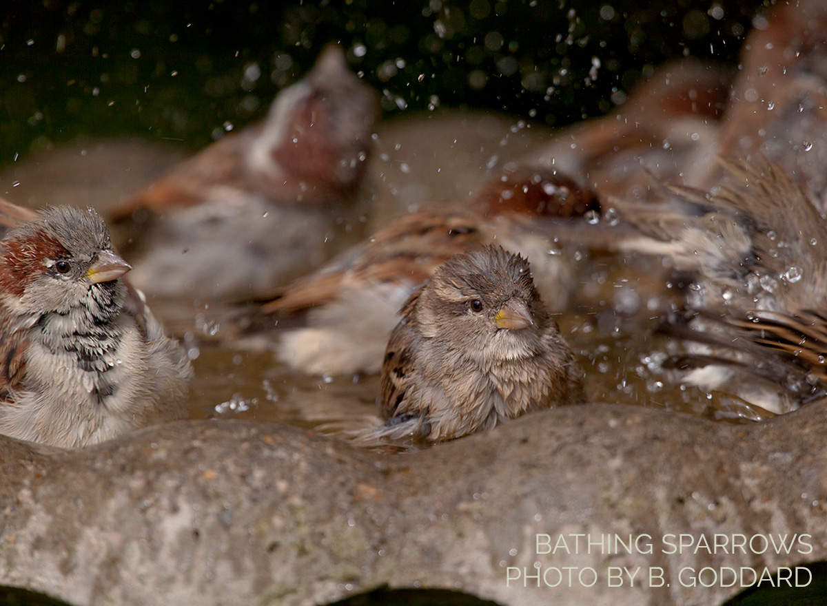 Top 10 Tips for Attracting Birds with Water