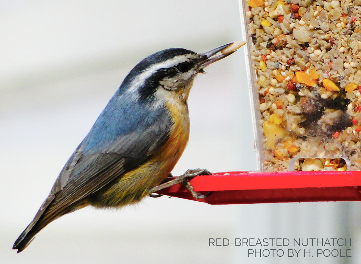 Making a Good Match: Bird Seed and Bird Feeders