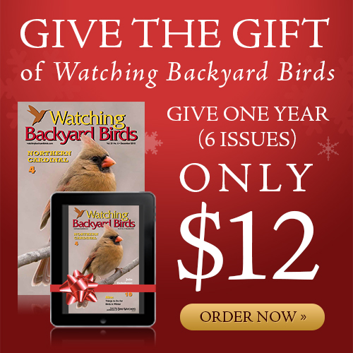 Give the Gift of Watching Backyard Birds!