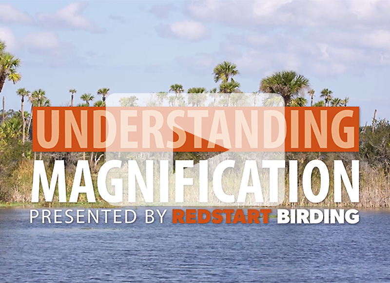 Play our video: Understanding Magnification on Binoculars