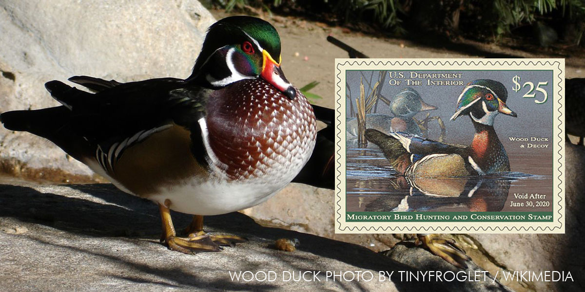 2019-2020 Federal Duck Stamp Available for Purchase