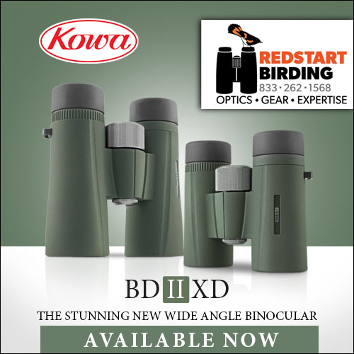 The Stunning NEW Wide Angle Binocular by Kowa: Available Now at Redstart Birding!