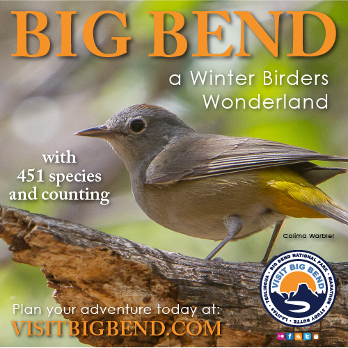 Big Bend: A Winter Birders Wonderland with 451 species and counting
