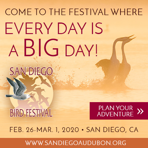 Come to the Festival Where Every Day is a Big Day! San Diego Bird Festival, Feb. 26-Mar 1, 2020.