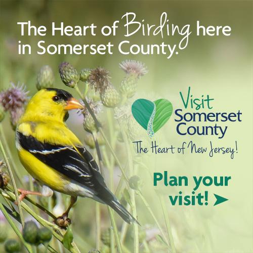 The Heart of Birding in Somerset County, NJ