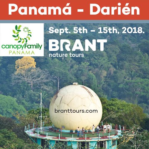 Brant Tours