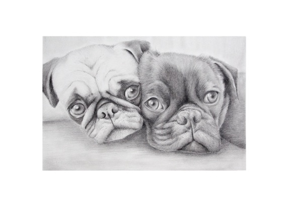 Cuties pug pencil drawing