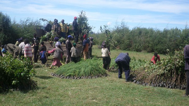 Trees being delivered to the Asanyo settlement