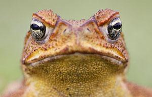 cane toad workshop