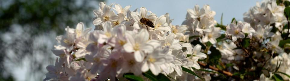 Kokopelli Bee Free Header (C) Stefanie Neumann