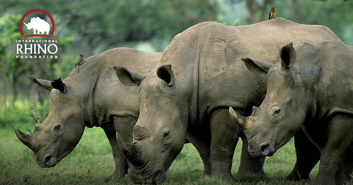 picture of a rhino