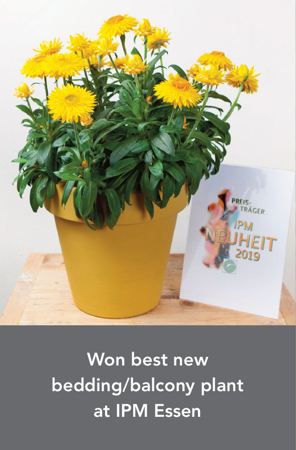 Won best new bedding/balcony plant at IPM Essen