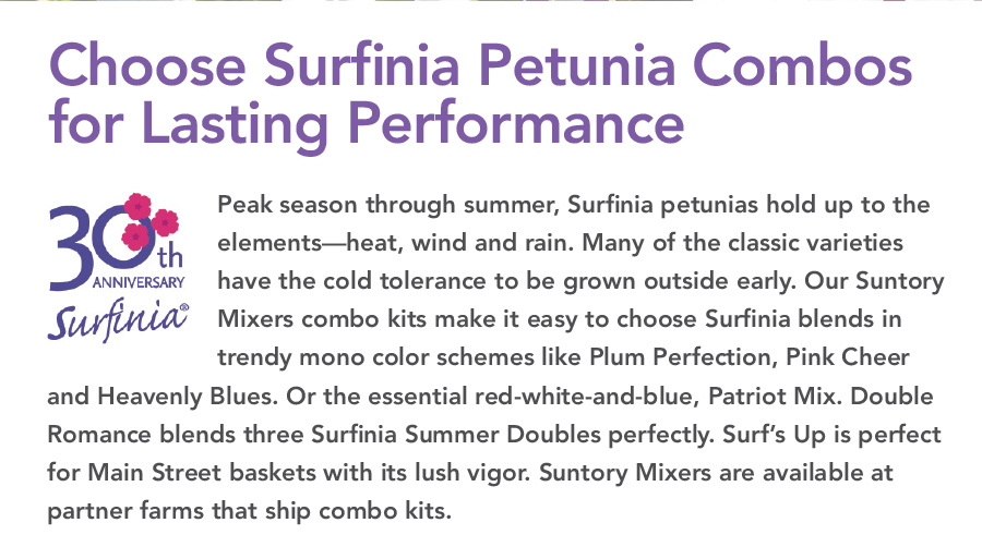 Surfinia 30th Anniversay! Peak season through summer, Surfinia petunias hold up to the elements — heat, wind and rain. Many of the classic varieties have the cold tolerance to be grown outside early.