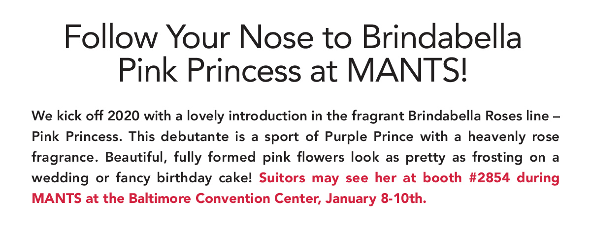 Follow Your Nose to Brindabella Pink Princess at MANTS!
